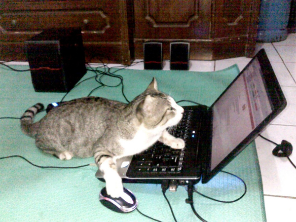 Hacker Cat's Got It